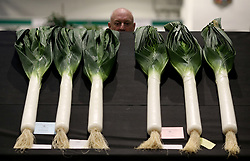 © Licensed to London News Pictures. 14/09/2018. HARROGATE, UK. Leeks on show during the Harrogate Autumn Flower Show which runs from 14-15 September with over 5,000 blooms and an expected attendace of 60,000 visitors at the Yorkshire Showground in Harrogate..  Photo credit: Nigel Roddis/LNP