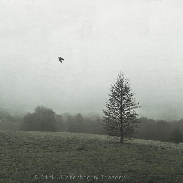 Baum im Winter auf Weide bei Nebel, Wuppertal, Deutschland