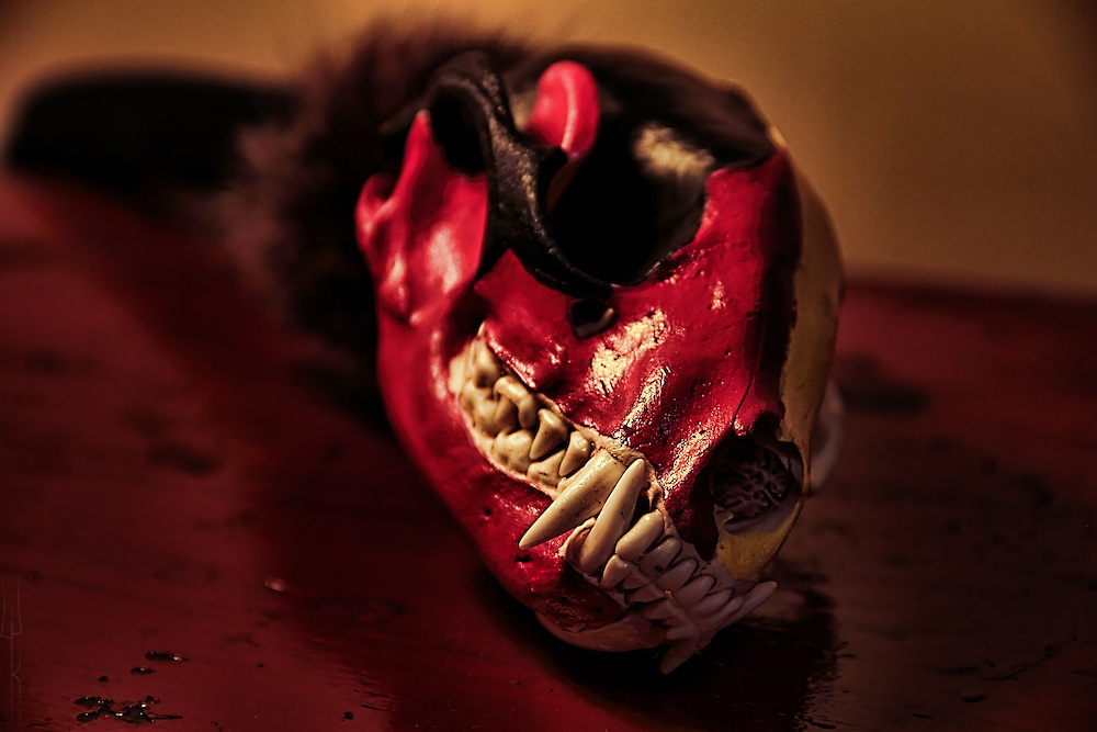 Close up of a Native American made rattle, featuring a traditionally painted Raccoon skull.