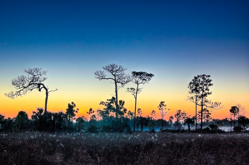 Sunrise in the Big Cypress National Preserve.