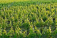 Shinn Estate Vineyard, Mattituck, Oregon Road, Long Island, New York North Fork,