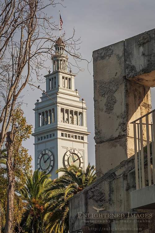 Palm trees and the historic Ferry Building Clock Tower, on the Embarcadero, San Francisco, California