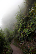 Mist shrouds a walk way in the Bamboo Forest in southern Sichuan Province.