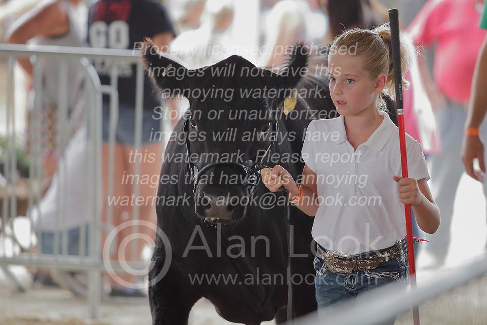 03 August 2017:  A young girl shows an angus cow 2017 McLean County Fair<br /> <br /> #alphoto513