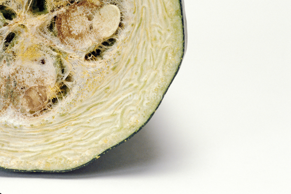 detail of cross section of a drying zucchini
