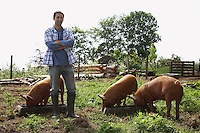 Man feeding pigs in sty portrait
