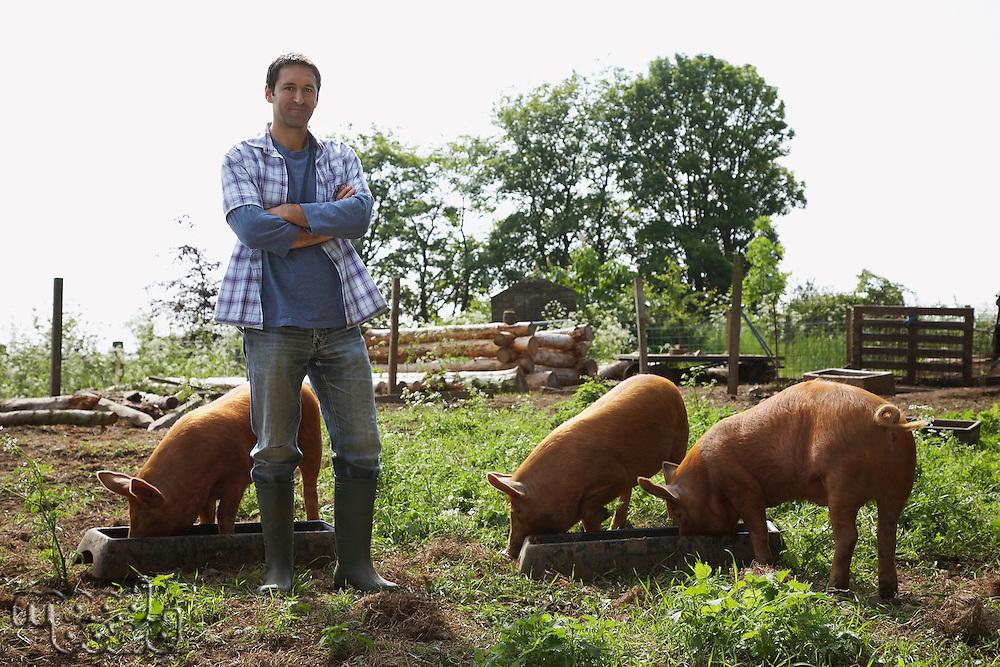 Man feeding pigs in sty portrait