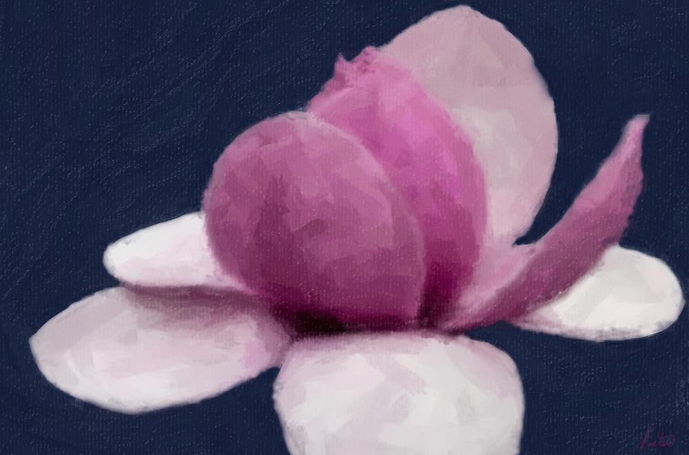 Tulip Tree Flower