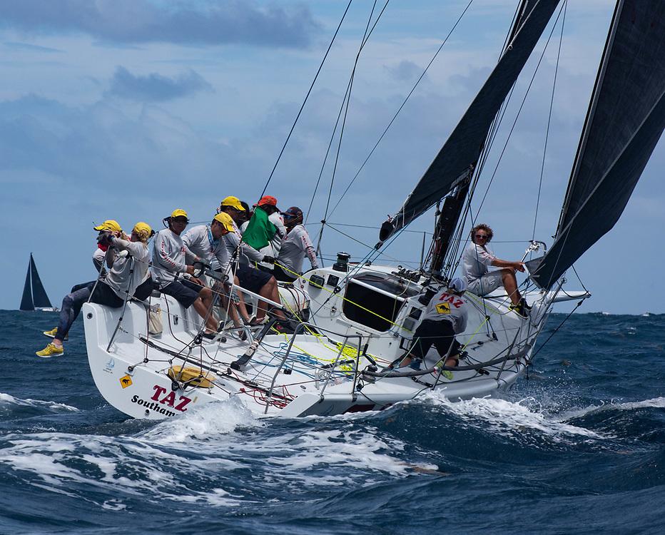 Taz at Antigua Sailing Week