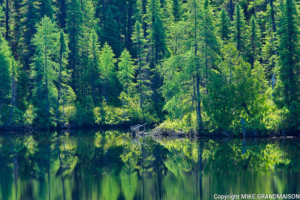 Chibougameau River reflection. Boreal forest<br />Chibougameau<br />Quebec<br />Canada