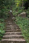 Steps to Nongriat Village<br /> Home of Living bridges or Root bridges (Ficus elastica)  Renee<br /> Khasi Tribe<br /> Nongriat, Khasi Hills<br /> Meghalaya, ne India<br /> Range: South China, NE India, Burma
