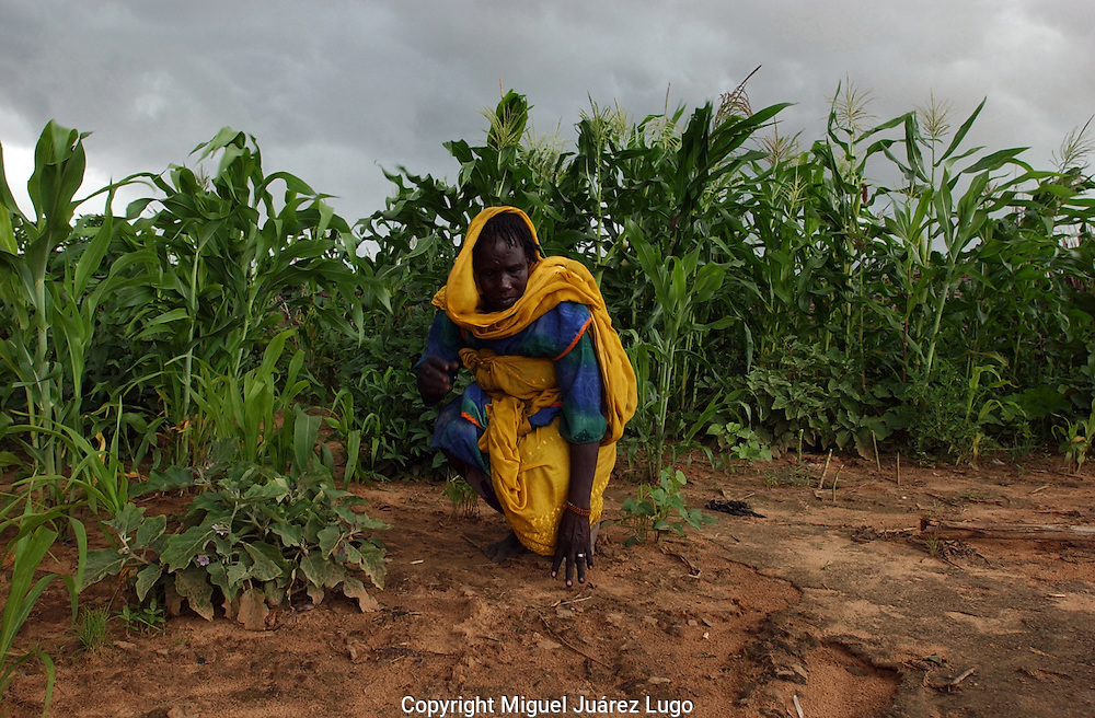 Goz Beida, Chad: A woman in Djabal refugee camp checks on the eggplant and maize in her garden. Djabal camp is nearly four years old. The 15,000 refugees from Darfur live in a maze of straw huts and most have small gardens that are doing well this year, due to a generous rainy season. Chad is home to over 200 different ethnic and linguistic groups. Arabic and French are the official languages. Islam and Christianity are the most widely practiced religions. Chad is one of the poorest and most corrupt countries in the world; most inhabitants live in poverty as subsistence herders and farmers. Since 2003, crude oil has become the country's primary source of export earnings, superseding the traditional cotton industry.   (PHOTO: MIGUEL JUAREZ LUGO).