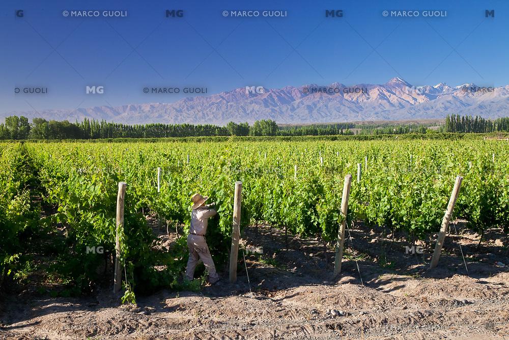 VINEDO Y PRE CORDILLERA DE LOS ANDES, TUPUNGATO, VALLE DE UCO, PROVINCIA DE MENDOZA, ARGENTINA - PHOTO © MARCO GUOLI