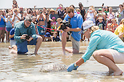 A rehabilitated Green sea turtle crawls back into the Atlantic ocean past crowds and the media during the release of rescued sea turtles May 14, 2015 in Isle of Palms, South Carolina. The turtles were rescued along the coast and rehabilitated by the sea turtle hospital at the South Carolina Aquarium in Charleston.