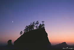United States, Washington, Olympic National Park, trees on sea stack near Rialto Beach at sunset, with crescent moon