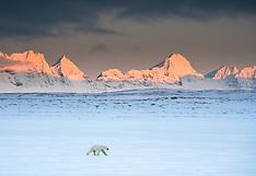 Svalbard #42 2019