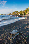 Punaluu Black Sand Beach, Kau, The Big Island of Hawaii