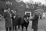 "20/02/1963.02/20/1963.20 February 1963.RDS Bull Show..1,500 guineas were paid to Mr Maurice Dinneen, Garrylaurence, Dungourney, by the Dept. of Agriculture for his Dairy Shorthorn champion ""Garrylaurence Command"". Image shows Mr Dinneen (right) showing the bull to J.D. O'Farrell, Clarecastle A.I. Centre and J. Farrell, livestock Inspector, Dept. of Agriculture, Cork."
