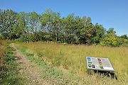 Tall Grass Prairie st Henteleff Park (Norman Park)<br /> Winnipeg<br /> Manitoba<br /> Canada