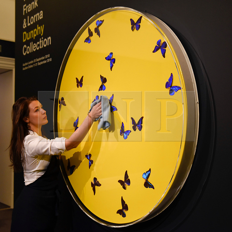 """© Licensed to London News Pictures. 14/09/2018. LONDON, UK. A technician checks """"Smashing Yellow Ball at Peace Painting"""", 2008, by Damien Hirst (Est. GBP100,000-150,000) at a preview of the """"Yellow Ball: The Frank and Lorna Dunphy Collection"""" sale at Sotheby's in New Bond Street.  Frank Dunphy was Damien Hirst's former business manager and mentor.  Over 200 works will be auctioned by Sotheby's on 20 September 2018.  Photo credit: Stephen Chung/LNP"""