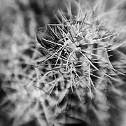 Cacti - Lensbaby - Joshua Tree National Park - Infrared Black & White