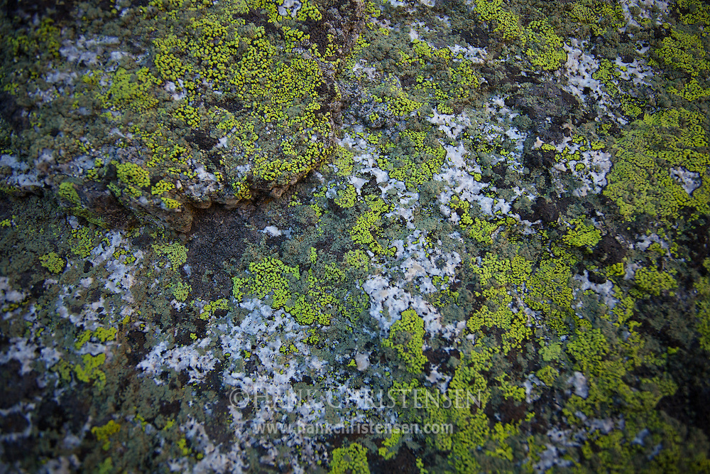 Moss grows on a white granite stone