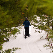 Wilderness State Park Remote Snowshoe Trail