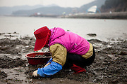 "Women collecting mussels on the open ""Mysterious Sea Road"" in Hoedong shore (Jindo island). Jindo is the 3rd biggest island in South Korea located in the South-West end of the country and famous for the ""Mysterious Sea Route"" or ""Moses Miracle"". Every spring thousands flock to the shores of Jindo to walk the mysterious route that stretches roughly three kilometers from Hoedong to the distant island of Modo. Materializing from the rise and fall of the tides, the divide can reach as wide as forty meters."
