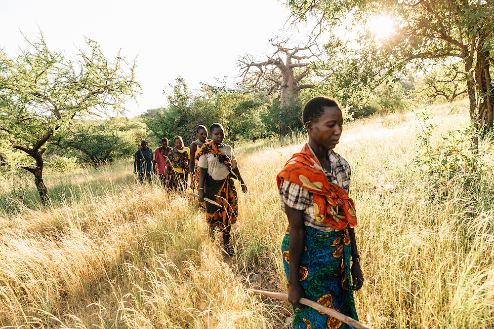 Female members of the Hadza tribe head out to forage for tuba's, fruit and berries. Yaeda valley, Northern Tanzania. Photo by Greg Funnell, March 2016.