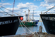 Fishing boats fleet in Massachusetts, USA
