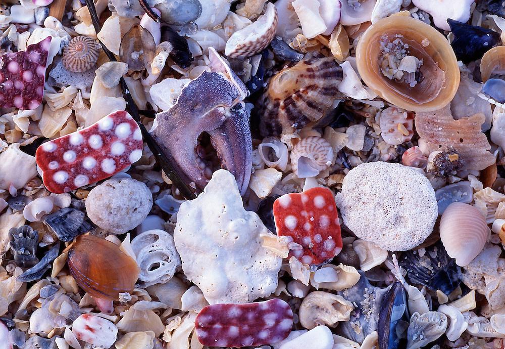 Shell sand; Coll