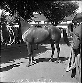 1961-08/08 Dublin Horse Show