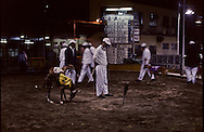Greyhounds races in Macau  - canidrome - . The races take place only at night, to not distract the greyhounds.  /// courses de levriers au canidrome de Macao, presentation des coureurs /// R229/    L1583  /  P0006223