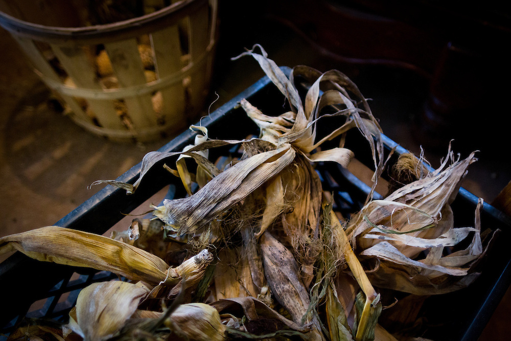 In the milkhouse, a crate of dried corn husks from an experiment the previous summer in growing popping corn in the vegetable garden.