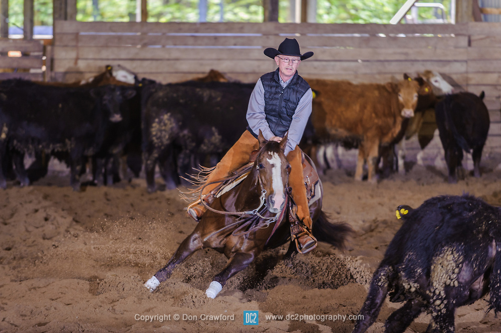 May 20, 2017 - Minshall Farm Cutting 3, held at Minshall Farms, Hillsburgh Ontario. The event was put on by the Ontario Cutting Horse Association. Riding in the Open Class is Brain Kelly on Scarlet Catdancer owned by Ronald Stelzl.
