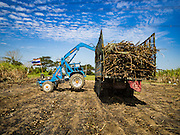 24 JANUARY 2017 - THUNG LUK NOK, NAKHON PATHOM, THAILAND: Sugarcane is loaded into a truck in a cane field in Thung Luk Nok. Thai government  officials recently announced that they plan to float sugar prices later this year or early in 2018. Wholesale prices are currently set by the Cane and Sugar Board, a part of the Industry Ministry, while the Commerce Ministry sets the retail price. Thailand has fixed retail prices of sugar to guarantee a profit for farmers. Thailand is the world's leading exporter of sugar, after Brazil. Thai sugar production is expected to drop by more than three percent because of the lingering drought that crippled agriculture through 2015 and 2016.    PHOTO BY JACK KURTZ