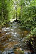 Naturpark Schwarzwald Mitte-Nord..Eyachtal, Bach im Wald