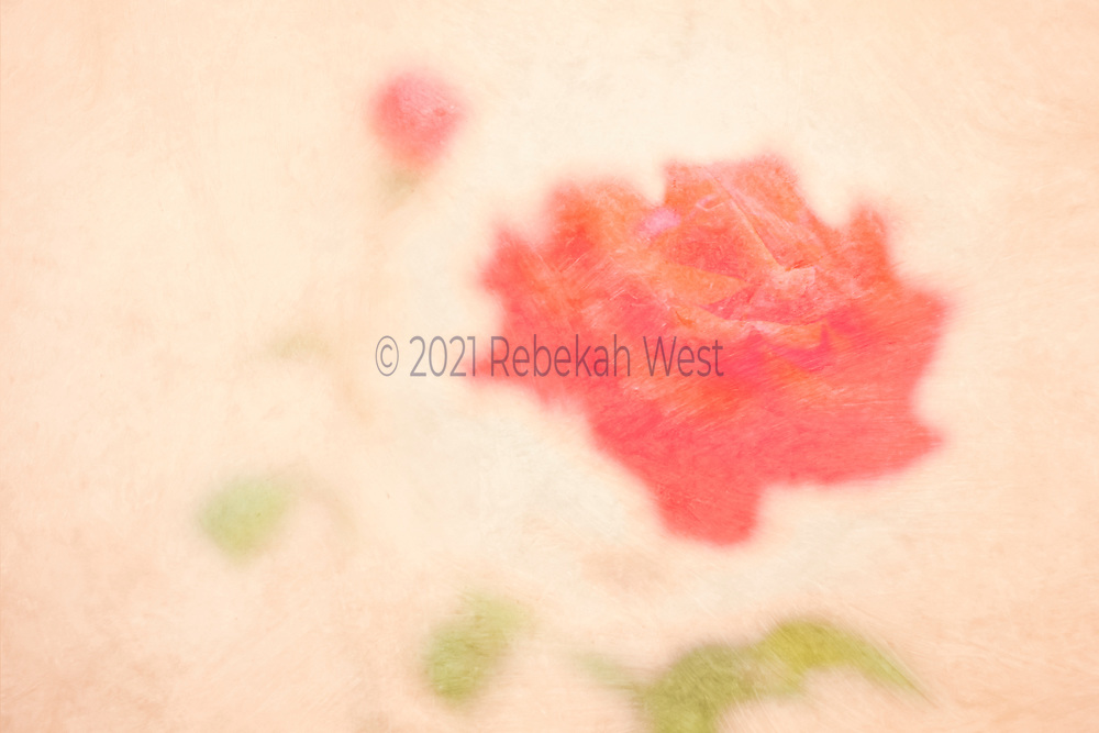 Fully open red-orange rose with tiny bud and three green leaf blobs, large open rose sits centered on the right half of horizontal field, bud and leaves curve in a semi-circle from bottom right to up center a little to the left, background is a soft millenial pink, flower art, feminine, high resolution, licensing, 5097 x 3398