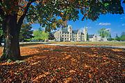 Galt Collegiate and maple leaves