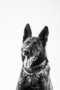 Jany<br /> K9<br /> Security Forces, MWD<br /> OEF<br /> Present<br /> <br /> Veterans Portrait Project<br /> 802d Security Forces Squadron<br /> San Antonio, TX