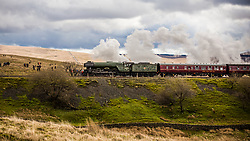 © Licensed to London News Pictures. 31/03/2017. Ribblehead UK. The Flying Scotsman crosses the Ribblehead Viaduct in the Yorkshire Dales today -  marking the re-opening of the Settle to Carlisle rail line. Journeys on the line were halted more than a year ago after heavy storms. Photo credit: Graham Eva/LNP