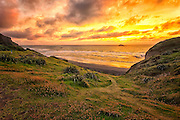 Muriwai, Auckland, New Zealand