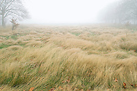 Field on foggy day in autumn