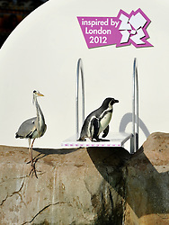 © Licensed to London News Pictures. 29/03/2012. London, UK. A heron investigates the board. Penguins discover a new diving board in their enclosure at London Zoo today 29 March 2012. The board has been granted the 'Inspire Mark' by the London 2012 Inspire programme which recognises ideas inspired by the Olympic Games. Photo credit : Stephen SImpson/LNP
