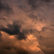 Bird in fight cloudy Sky