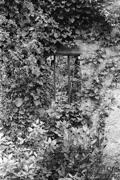 Kroatia 2012-06.<br /> Et vindu med jerngitter gjemt bak planter i skogen på Lopud.<br /> Foto: Svein Ove Ekornesvåg