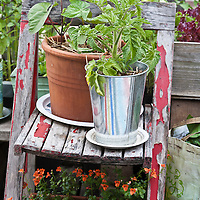 An urban rooftop container garden with mixed herbs and vegetables. ontainer garden.
