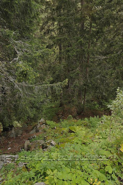 Forest of Switzerland