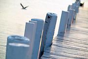 USA, Newport, RI - Gull flies past pilings of Bannister's wharf.