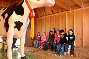 Students learn about milking cows at Tucson Village Farm, Tucson, Arizona, USA.